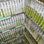ACOI Coimbra Collection of Algae